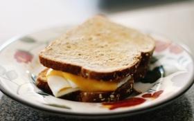 Картинка cheese, egg, sandwhich