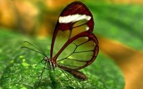 Картинка макро, насекомые, разное