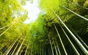 Обои природа, небо, зелено, деревья