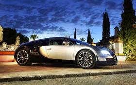 Обои фары, вечер, Bugatti, veyron, Растения