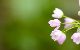 Обои цветок, макро, цветы, фото, цветки, зелёный фон, full hd wallpapers 2560x1440