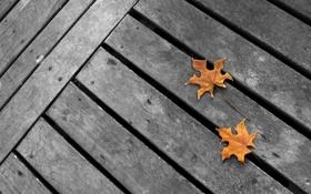 Обои фото, дерево, доски, листок, листья, leaves, фоновые картинки 1920x1200