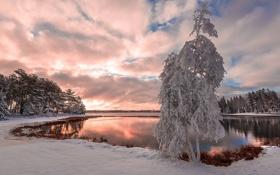 Картинка зима, озеро, дерево
