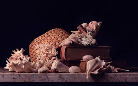 Обои книги, шляпа, кораллы, ракушки, hat, books, shells