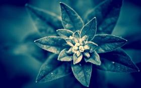 Обои листья, спокойствие, растение, ворсинки