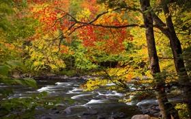 Картинка осень, листья, деревья, река, камни, Ontario, Algonquin Park