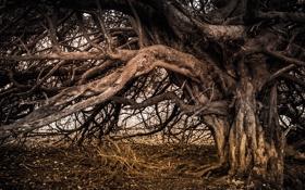 Картинка природа, фон, дерево