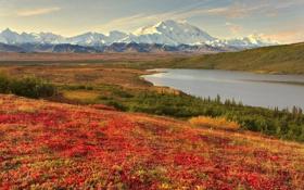 Картинка луг, горы, вода