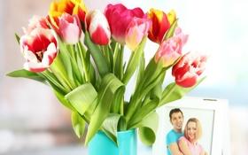 Обои цветы, фото, тюльпаны