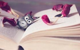Картинка книга, часы, текст, лепестки, сова