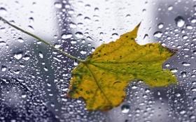 Обои стекло, листья, капли, макро, дождь, листок, капля