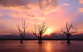 Обои закат, река, деревья