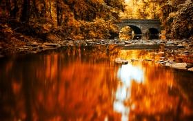 Картинка лес, мост, отражение, река, зеркало