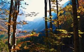 Обои осень, лес, горы, природа