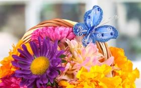 Картинка цветы, бабочка, корзина, букет, лепестки