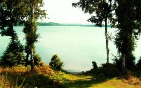 Обои вода, озеро, березы