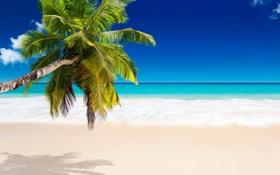 Картинка песок, море, пляж, тропики, пальмы, берег, summer