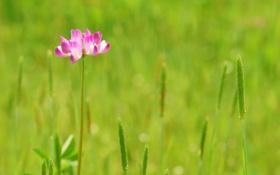 Обои поле, трава, макро, цветы, природа, фото, обои