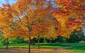 Обои листья, дорожка, трава, деревья, парк, осень