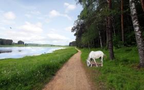 Обои пейзаж, река, конь, дорога