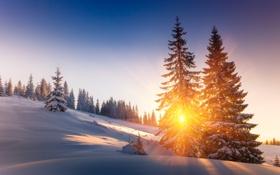 Обои Закат, Природа, Зима, Деревья, Снег, Рассвет, Лучи