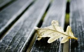 Обои листья, макро, доски, осеннний лист
