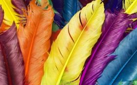 Обои разноцветные перышки, перья, птицы