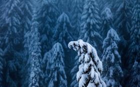 Картинка зима, лес, снег, туман