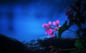 Обои листья, цветок, макро