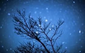 Картинка небо, звезды, ночь, природа, дерево, ночьное небо, ночьное боке