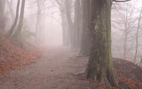 Обои осень, деревья, природа, туман, листва, утро
