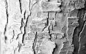 Обои макро, дерево, обои, Ч/б, текстура, кора