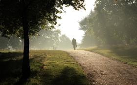 Картинка туман, парк, человек, дорожка