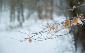 Картинка зима, листья, макро, снег, ветка, желтые, сухие