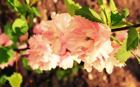 Обои радость, дерево, розовый, роза, чувства, куст