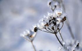 Обои трава, белый, мороз, природа, снег, зима