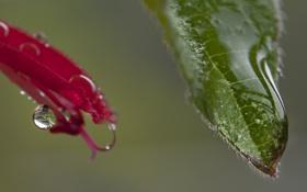 Картинка листья, вода, капли, природа