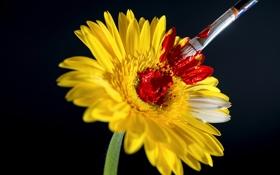 Обои цветок, краска, кисточка, кисть