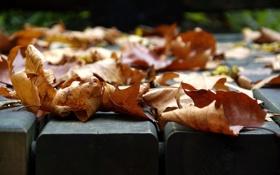 Картинка осень, листья, макро, фото, настроения, листва, листок