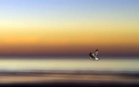 Обои море, небо, полет, птица, берег, крылья, чайка