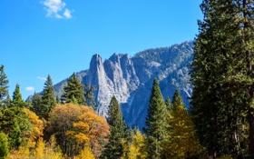 Картинка США, лес, Национальный парк Йосемити, скалы, небо, солнце, голубое