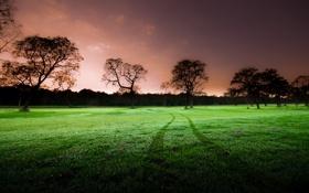 Обои зеленое, деревья, след, природа, поле, вечер
