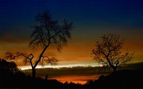 Обои небо, деревья, пейзаж, закат, природа, вечер