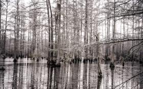 Обои природа, лес, деревья