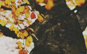 Картинка осень, листья, дерево, листва, желтые, оранжевые