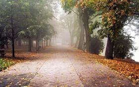 Картинка пейзаж, осень, аллея, листья, грусть, деревья, туман