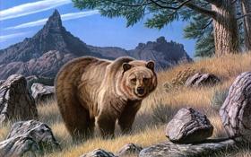 Обои животные, горы, камни, живопись, бурый медведь, свирепый, валуны