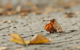 Обои осень, лист, макро