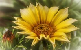 Картинка цветок, желтый, фон, размытость, бутон