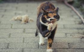 Картинка кошка, лето, кот, лапа